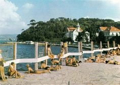 Tarabya Oteli (1977) #Sarıyer #istanbul Istanbul Pictures, Turkey History, Once Upon A Time, Old Town, Old Photos, Dolores Park, Nostalgia, To Go, Photography