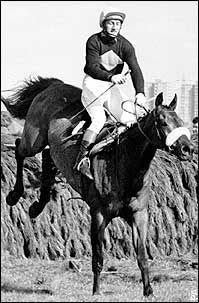 Red Rum is the nation's best-known steeplechaser having won the prestigious Grand National 3 times and came second twice! Red Rum only just won his first National to the favorite Crisp.No horse has equaled his wins and it is doubted that any ever will. He is reputed to be the most popular race horse ever. He retired before the 1978 National but led the parade from then until 1994. In 1995, Red Rum turned 30, but sadly died later that year.