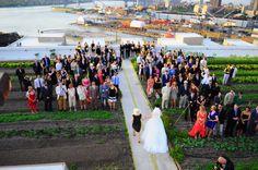 Wedding Ceremony at Brooklyn Grange PC: Anastasia Plakias Nyc Wedding Venues, Wedding Ceremony, Reception, Anastasia, Brooklyn, Dolores Park, Places, Travel, Viajes