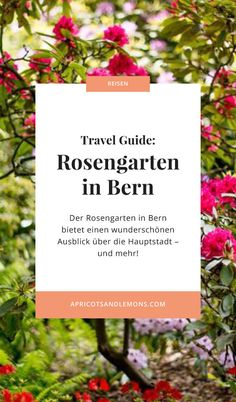 Travel Guide: Der Rosengarten in Bern – Apricots & Lemons Bern, Letter Board, Travel Guide, Lettering, Formal Gardens, Roses Garden, Travel Scrapbook, Switzerland, Travel Advice