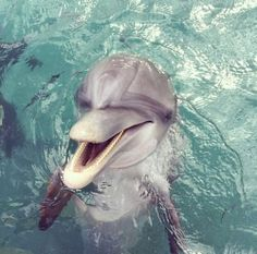 QOTD: What is something that's on your bucket list? I really want to swim with dolphins. xx