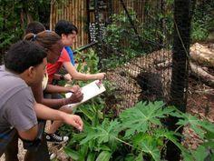 Belize Zoo Conservation Camp