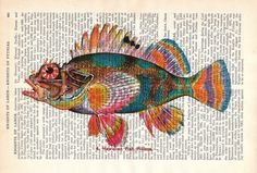 I like the way the printed words add depth to the fish painting.