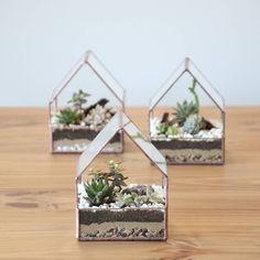How to Make your own Terrarium Succulent Arrangements, Succulents Diy, Succulent Decorations, Garden Terrarium, Succulent Terrarium, Glass Building, Garden Bulbs, Rock Decor, Stained Glass Patterns
