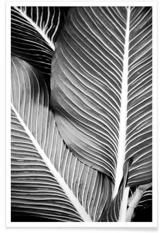 Tropical Leaves as Premium Poster by Froilein Juno | JUNIQE
