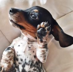 Talk to the paw!!!