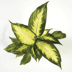 Indoor Plants, Plant Leaves, Nature, Inside Plants, Naturaleza, Nature Illustration, Off Grid, Natural