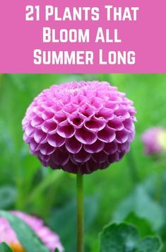 Enjoy these gorgeous blooms all summer long with these long-blooming plants. Garden Yard Ideas, Lawn And Garden, Garden Projects, Beer Garden, Glass Garden, Balcony Garden, Garden Beds, Garden Art, Outdoor Plants