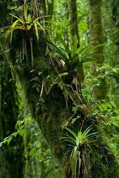 Brazilian rain forest