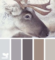 rustieke stoere en warme kleuren , color inspiration, calm winter color palette, love these neutral winter colors.remind me of looking out the window while sitting by the fire place. view of a winter wonderland Color Palate, Color Tones, Design Seeds, Paint Schemes, House Painting, Painting Walls, House Colors, Color Combos, Color Inspiration