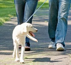 More About Dog Arthritis and Exercise - yes they need to exercise even with arthritis