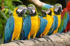 28 Amazing Macaw Photos and Fun Facts
