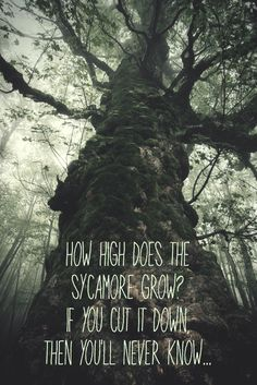 How high does the sycamore grow? If you cut it down, then you'll never know... #Pocahontas #colorsofthewind #disney #deepquotes