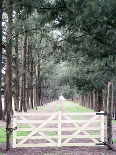 "I've dreamed of having a horse ranch just like this. I want a ""road"" of trees like this one..."