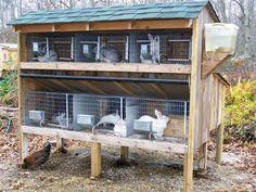 Quail Breeding Pen Plans | Большая клетка для кроликов