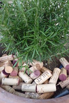 Wine corks are an excellent mulch for potted plants or small beds.
