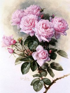 (Original as re-pinned)  Paul De Longpre - Paul De Longpre - Roses and Bumblebees Painting