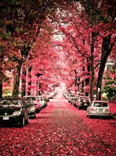 I wish i can walk on this road with the pink trees on the side, it is just so pretty.  This photo contains line of direction, which is the road that makes your eyes follow the straight road .  Also, this photo contains repetition and they are the trees.