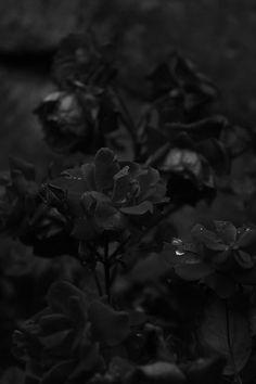 Tenebris // #color #colours #black