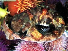 """Some types of catsharks (""""shysharks"""") curl up like cats when they feel threatened! Shark Week, Curls, Cute Animals, House, Type, Feelings, Pets, Oceans, Twitter"""
