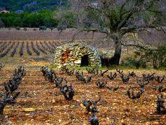 Vinya i barraca de Pedra Seca, Pontons, Alt Penedès.