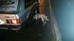 """""""O Grito do Bicho"""": Jovem acorrenta cachorro em carro e arrasta animal..."""