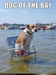 funny dog pictures - DOG OF THE BAY