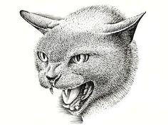 How to Draw a Cat with Pen and Ink http://www.artyfactory.com/drawing_animals/how_to_draw_a_cat/how_to_draw_a_cat.htm