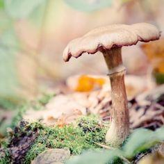 "Woodland Nature Photography Print ""Mushroom No. 8"""