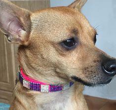 Fancy Fuschia Pink and Blue Crystal Rhinestone Dog Collar, Long Bling Dog Collars, Rhinestone Dog Collar, Beaded Dog Collar, Cat Collars, Pink Dog, Chihuahua Dogs, Clay Beads, Big Dogs, Dog Leash