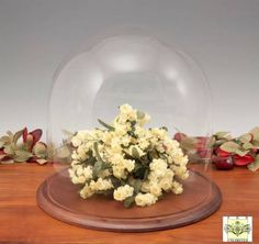 Glass Domes - Large diameter x high.Oh the things that can be displayed inside this large display dome! Glass Dome Display, Glass Domes, The Bell Jar, Gingerbread, House Ideas, Base, Canning, Create, Home Canning