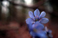Spring flower by Rafał Zalewski on 500px