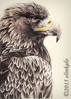 Majestic Eagle by elinkalo drawing
