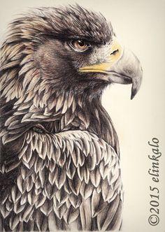 Majestic Eagle by elinkalo drawing