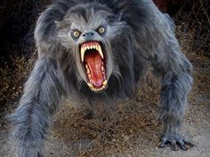 by Patrick Bromley Werewolves are awesome movie monsters, so it makes sense that there would be so few actual good werewolf movies. Best Werewolf Movies, Scary Movies, Werewolf Costume, Werewolf Art, Werewolf Tattoo, Arte Horror, Horror Art, Apocalypse, Of Wolf And Man