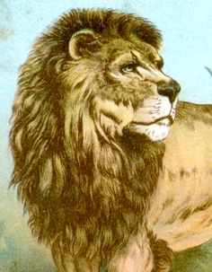 I'm not lion, you should check out these antique prints. And please repin.    http://store.sandtique-rare-prints.com/    http://stores.ebay.com/SANDTIQUE-Rare-Prints
