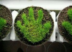Preschool Crafts for Kids*: Earth Day/Father's Day Hand Print Grass Pot Craft note: use sponge for handprint Science Activities, Activities For Kids, Crafts For Kids, Preschool Crafts, Childcare Activities, Cadeau Parents, Garden Club, Plantation, Spring Crafts