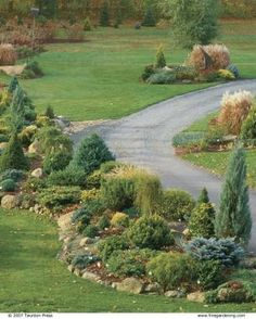 Conifers of all shapes, sizes, and colors grow in free-form, raised beds edged with stone. Composing with Conifers | Fine Gardening