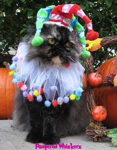 Jolly Jester hat for cats and dogs with Lifes by PamperedWhiskers, $19.99