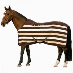 how to Purchasing a horseware ~ Advices for happy life