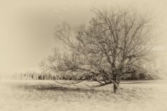 Title:Alone; Artist Name:Mike DeCesare; Description:A single tree grows well ahead of a forest of tree...; Art Form:Photography; Style:Photorealism; Media:Photography: Photographic Print; Genre:Landscape
