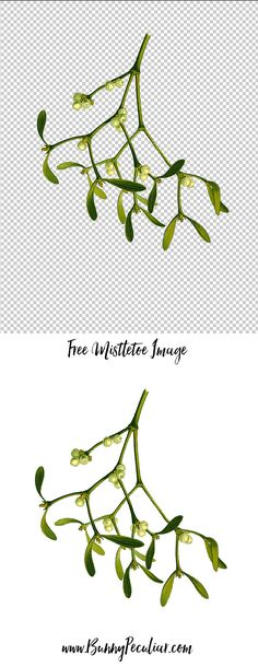 Beautiful free mistletoe hi res image printable. Perfect for art and craft projects. You can download the mistletoe graphic on a transparent or white background if you prefer. | Bunny Peculiar Printables