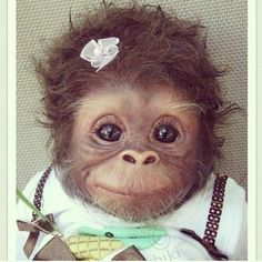 CUTEst Baby monkey all dressed up! #cute