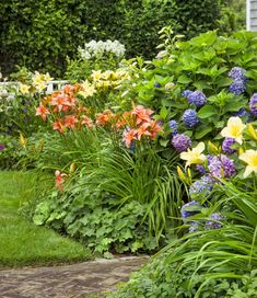 Endless Summer Hydrangeas// 'Nikko Blue' hydrangeas were replaced with 'Endless Summer,' which blooms all season. 'Hyperion' and 'Chicago Peach' daylilies lend sunny contrast. Perenial Garden, This Old House, Nantucket Cottage, Daylily Garden, Cottage Garden Plants, Cottage Garden Borders, Garden Arches, Day Lilies, Back Gardens