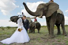 Dream African Wedding Photos