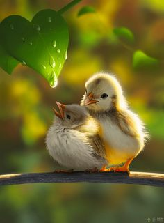 Looking for for images for good morning images?Check out the post right here for cool good morning images inspiration. These hilarious images will make you happy. Cute Birds, Pretty Birds, Beautiful Birds, Animals Beautiful, Wonderful Flowers, Nature Animals, Animals And Pets, Nature Pictures, Animal Pictures