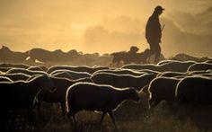 pastores de ovejas - Buscar con Google