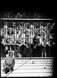 How People Look to Monkeys, Stanley Kubrick, 1946. Stanley Kubrick was born in New York. I like this photograph because of the contrast in environments. The poor isolation of the monkey and freedom of humans shows how environments aren't always natural.