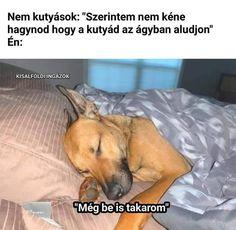 Kari, Animals And Pets, Lol, Puppies, Memes, Funny, Pets, Cubs, Meme