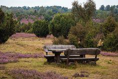 Gestiftete Bank in der Heide Heide Park, Outdoor Furniture Sets, Outdoor Decor, Birch Bark, Destinations